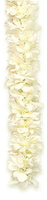 Image Triple Ginger White Orchid Lei